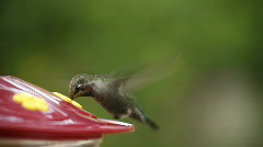 Hummingbird slow liftoff Stock Footage