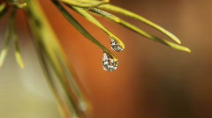 Water Droplet Swirling Inside Dew Dripping on Pine Needle Stock Footage