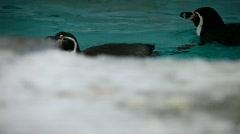 Penguin Stock Footage