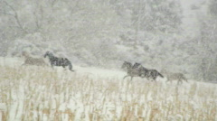 Horses Run Through Snow Stock Footage