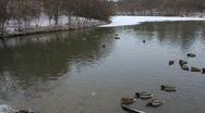Ducks swimming 1 Stock Footage