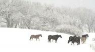 Horse Snow Scene Stock Footage