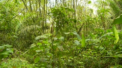 Heavy jungle, Ecuador, lock off shot Stock Footage