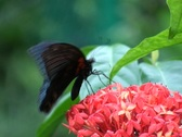 Stock Video Footage of Butterflies in Flower and Garden