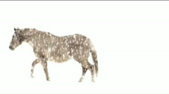 Horse Electric Stock Footage