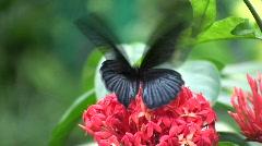 Butterflies in Flower and Garden Stock Footage