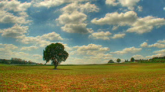Lonely tree in field hdr time lapse - stock footage
