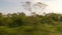 Drive plate, Ecuadoran bush country Stock Footage