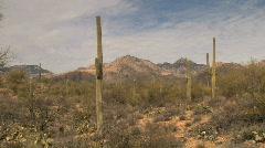 Saguaro Cacti In Sonoran Desert - stock footage