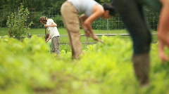 A worker tends a farm (wide) - stock footage