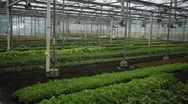 Green House Wide Stock Footage