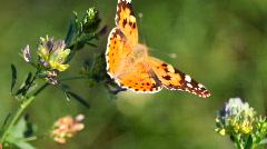 Batterfly Stock Footage