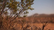 Stock Video Footage of Desert Bush and view