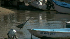 Egret in water Stock Footage