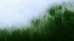 Misty Forest Mountain (HD) Stock Footage