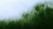 Stock Video Footage of Misty Forest Mountain (HD)