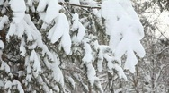 Snow falling from the branches Stock Footage