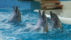 HD Dolphins performing in a dolphin show, playing with balls, closeup Stock Footage