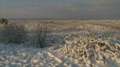 Snow landscape veluwe pan H008001 000254 Stock Footage