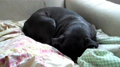 Stock Video Footage of Waking Dog