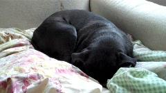 Waking Dog Stock Footage
