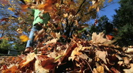 Kids in Fall Leaves 4 Stock Footage