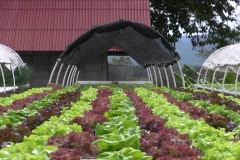 HYDROPONIC FARM Garden Vegetable Cultivation Crop Agricultural Technology - stock footage