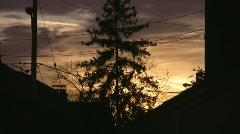 Suburban sunset tree. Timelapse shot. Stock Footage
