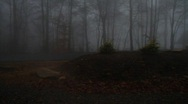 Mountain Fog and trees, slow tilt up Stock Footage