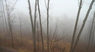 Mountain Fog and trees, slow panned wide shot Stock Footage