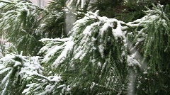 Snow evergreen background traffic silent 15s Stock Footage