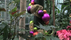 Usbg decorated tree pan up silent 15s Stock Footage