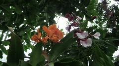 Usbg orange purple overhead silent 10s Stock Footage