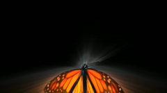 VJ Loop buterfly HD 02 - stock footage