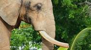 Elephant Walking Stock Footage