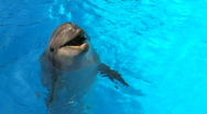 Stock Video Footage of HD Smiling dolfin playing in Swimming Pool, , closeup