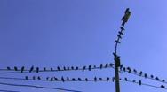 HD Birds on power line on blue sky background  Stock Footage