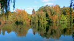 HD Fall foliage reflected in the Lake, willow branch foreground Stock Footage