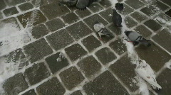 HD1080p Pigeons in Vienna City Austria Stock Footage