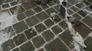 HD1080p Pigeons in Vienna City Austria Stock Footage