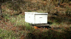 Bee Hive long shot Stock Footage