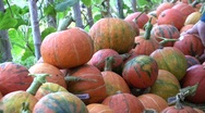 Stock Video Footage of Organic squash for sale in a farmer's market.