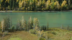 Autumn beach trees & river Stock Footage