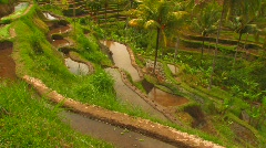 Bali Farmer Rice Paddy Terrace Planting Harvest Indonesia Exotic Travel  Stock Footage