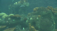 P00850 Artificial Coral Reef and Marine Fish - stock footage