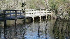 Boardwalk Bridge In Boyd Hill Nature Park Stock Footage