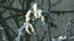 Frost encrusted leaves Stock Footage