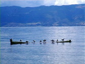 Birds On a Boat Stock Footage