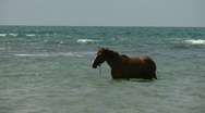Stock Video Footage of Horse in water 1