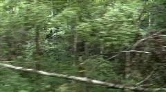 Riding a Train Through The Woods02 Stock Footage